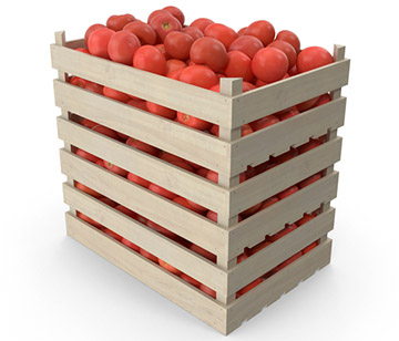 Tomatoes Rippening Crates